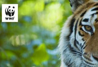 WWF Tiger Tales